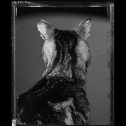 Chat de dos, Août 1982, Paris © Bettina Rheims, collection Maison Européenne de la Photographie